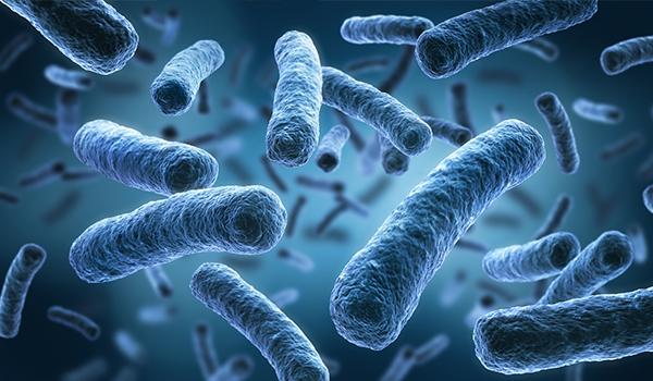 Preveneo - Mikroflora i markery jelitowe